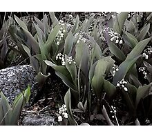 Lilies of the Valley Mindscape No 2 Photographic Print