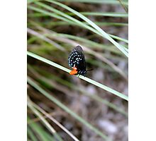 Butterfly on Blade of Grass Photographic Print