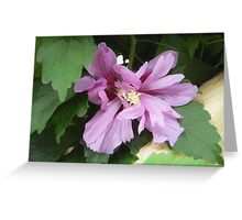 Lilac Flower of China Greeting Card