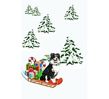 Black Tri Aussie on a Sled Photographic Print