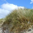 Wild Grasses by MidnightMelody