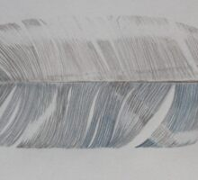 Blue Jay Feather Sticker