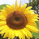 sunnyside up by brucemlong
