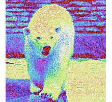 Colorful Bear Photographic Print