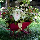 FLOWER WHEEL BARROW by Pauline Evans