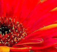 Red Flower by Karl Willson
