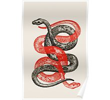 Twin Snakes Poster
