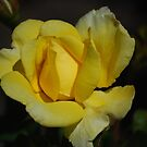Simplicity in Yellow by Carol Clifford