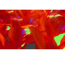 Tropical Red Leaves Photographic Print