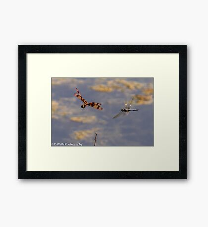 Dragonflies flying. Framed Print