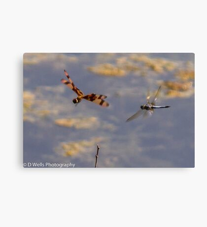 Dragonflies flying. Canvas Print
