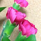 Flowers by Ginger  Barritt