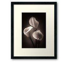 Three Calla Lilies Against Black Background Framed Print
