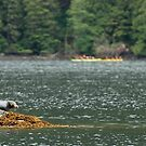 Seal and Kayaks by Troy Spencer