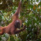 Wildlife - Wild & Free by Steve Bulford