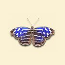 Royal Blue by Mark Podger