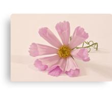 Pink Cosmo - Sea Shell Macro Canvas Print
