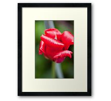 Red and Curly Framed Print