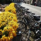 Bikes at Brugge (Bruges), Belgium by bubblehex08