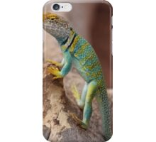 Collared Lizard at Colorado National Monument iPhone Case/Skin