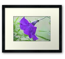 A Purple Petunia on the Porch Framed Print