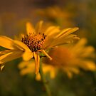 Evening Warmth by KatMagic Photography
