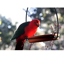 Pretty Polly Parrot Photographic Print