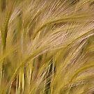 Golden Sheaves of Wild Grain by Skye Ryan-Evans