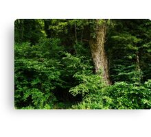 Foliage and trunk at the forest edge Canvas Print