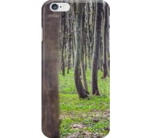 Hornbeam forest iPhone Case/Skin