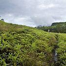 Dolen Salapwuk - Pohnpei, Micronesia by Alex Zuccarelli