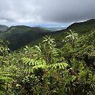 Dolmweir - Pohnpei, Micronesia by Alex Zuccarelli