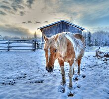 Palomino Paint and Barn in Winter by Skye Ryan-Evans