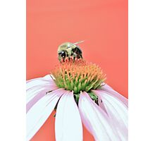 Mid-Summer Bee Photographic Print
