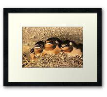 Baby Barn Swallows Framed Print