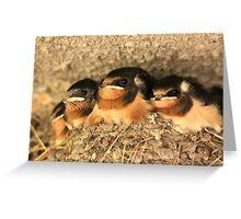 Baby Barn Swallows Greeting Card