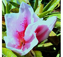 Pretty Pink Fab Flower Photographic Print
