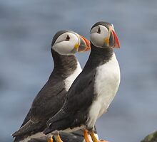 Mr & Mrs Puffin by M.S. Photography/Art