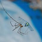 Damsel fly in distress by John E. McAlear
