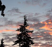 Trees and Sky by Jeff Harris