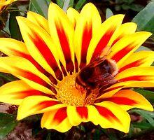 Bumble Bee in a Flower by poppyflower