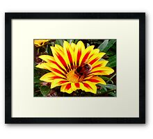 Bumble Bee in a Flower Framed Print