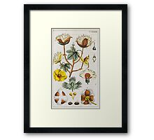 BOTANY - [Wilhelm, Gottlieb Tobias]. Conversations from the natural history of the plant kingdom. Framed Print