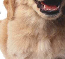 Puppy! Retriever! Sticker
