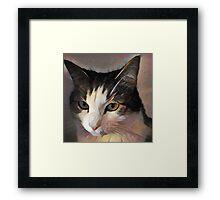 MeiMei Miao Portrait Of a Fat Cat Framed Print