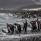 King Penguin Beach - South Georgia by Steve Bulford
