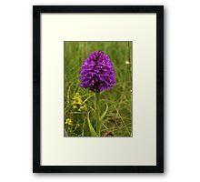 Pyramidal Orchid, Inishmore Framed Print