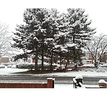 As the snow falls Photographic Print