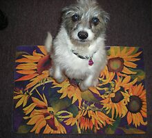Chloe wants all the Attention by Anne Gitto