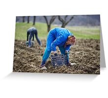 Family of peasants sowing potatoes Greeting Card